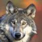 darkenwolf's picture